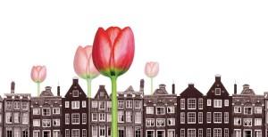 la-burbuja-de-los-tulipanescrisis-tulipan