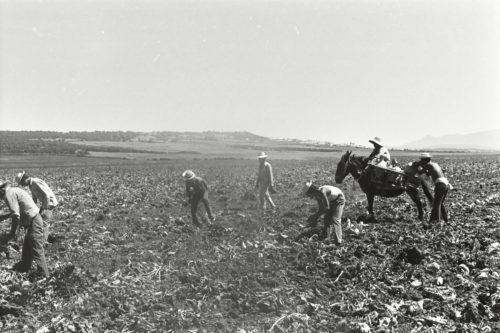VI Seminario Anual de Historia Agraria
